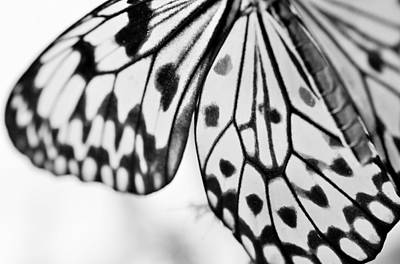 Poster featuring the photograph Butterfly Wings 3 - Black And White by Marianna Mills