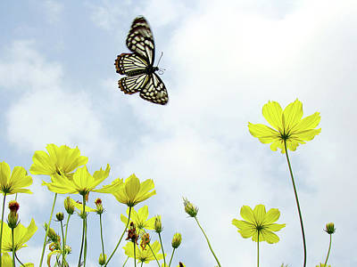 Butterfly With Flowers Poster by Adegsm