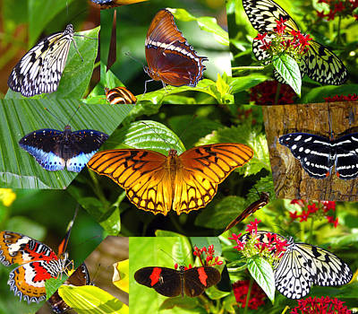 Poster featuring the photograph Butterfly Work 10 by David Lee Thompson