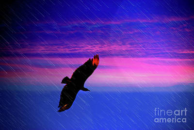 Poster featuring the photograph Buzzard In The Rain by Al Bourassa