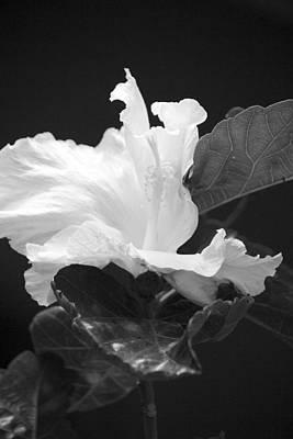 Bw Hibiscus Poster by Bonita Hensley