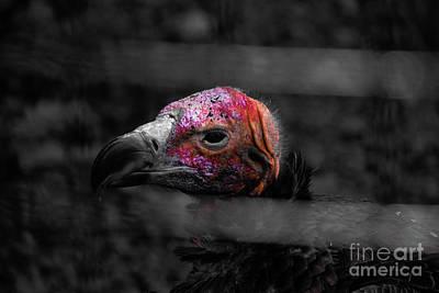 Bw Vulture - Wildlife Poster