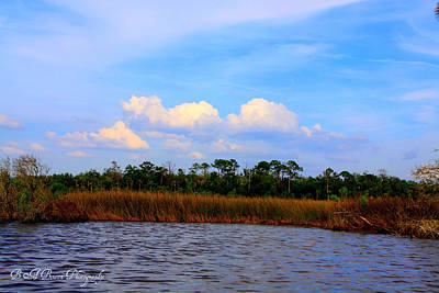 Poster featuring the photograph Cabbage Palms And Salt Marsh Grasses Of The Waccasassa Preserve by Barbara Bowen