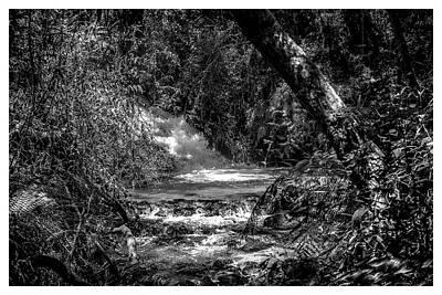 Cachoeira-parque Estadual-horto-campos Do Jordao-sp Poster