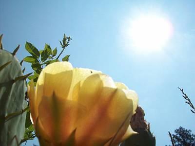 Cactus Enjoying Sun Light Poster