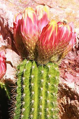 Cactus Flowe Bee Poster