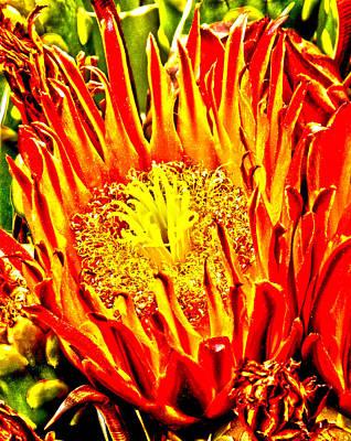 Cactus Flower Poster by Judi Saunders