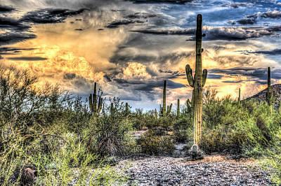 Cactus Galore Poster by Jon Berghoff
