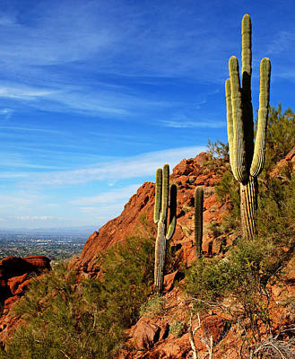Cactus On Camelback 14x17 Poster by Daniel Woodrum