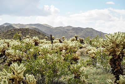 Cactus Paradise Poster