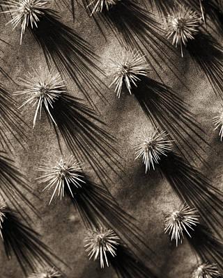 Cactus Shadows Poster