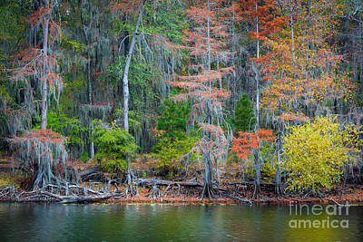 Caddo Lake Fall Foliage Poster by Inge Johnsson