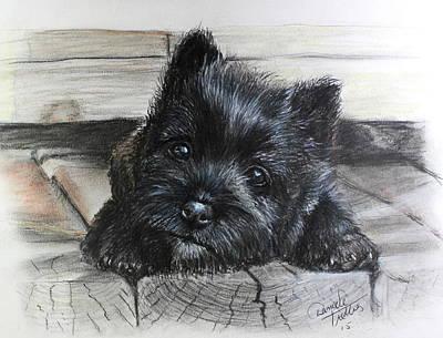 Cairn Terrier Poster by Daniele Trottier