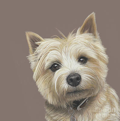 Poster featuring the painting Cairn Terrier - Dave by Donna Mulley