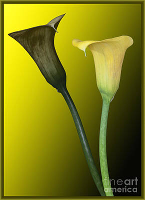 Cala Lilies Opposites Poster