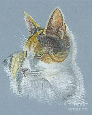 Poster featuring the drawing Calico Callie by Carol Wisniewski