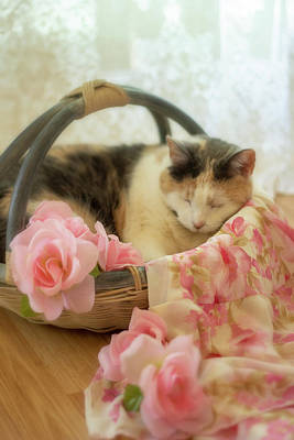 Calico Kitty In A Basket With Pink Roses Poster
