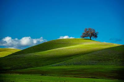California Black Oak Poster by Dan Holmes