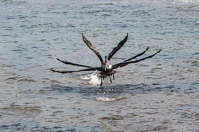 California Brown Pelicans Flying In Tandem Poster