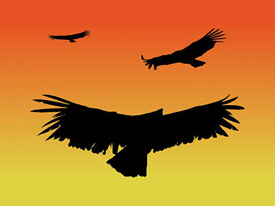 California Condors In Flight Silhouette At Sunset Poster