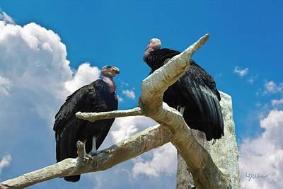California Condors Poster by Linda Dunn