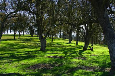 California Oak Woodland With Dappled Sunlight Poster