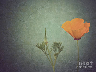 California Poppy Poster by Cindy Garber Iverson