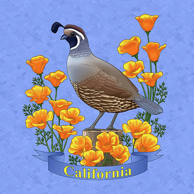 California Quail And Golden Poppies Poster by Crista Forest