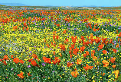 Poster featuring the photograph California Wildflower Super Bloom by Ram Vasudev
