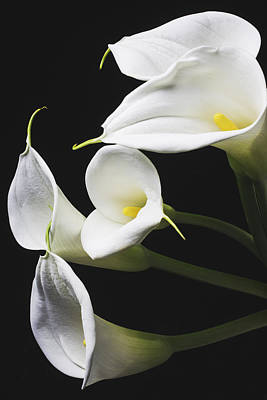Calla Lilies Bunch Poster by Garry Gay