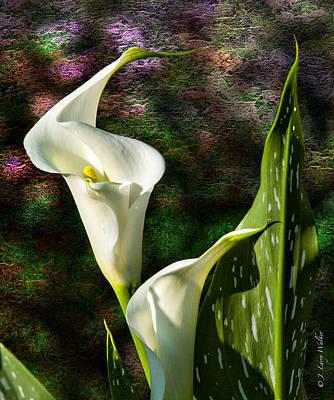 Calla Lily - P. Bright Poster