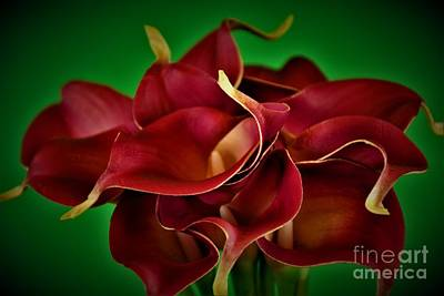 Calla Lily Bouquet Poster by Ray Shrewsberry