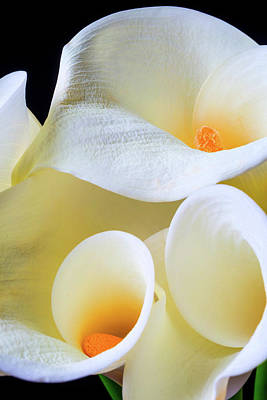 Calla Lily Close Up Poster by Garry Gay