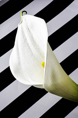 Calla Lily With Strips Poster by Garry Gay