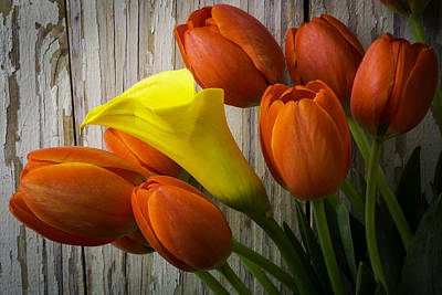 Calla Lily With Tulips Poster