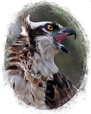 Calling Osprey Poster