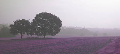 Calm Autumn Mist Poster