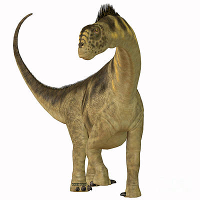 Camarasaurus On White Poster