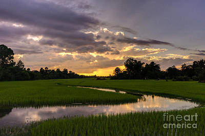 Cambodia Rice Fields Sunset Poster
