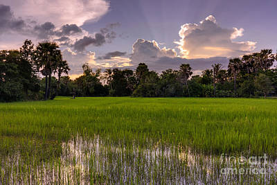 Cambodian Rice Fields Dramatic Cloudscape Poster