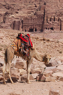 Camel In Front Of The Royal Tombs In Petra Poster