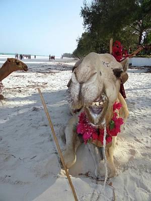 Camel On Beach Kenya Wedding2 Poster
