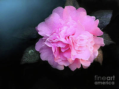 Camelia Poster by Robert Foster