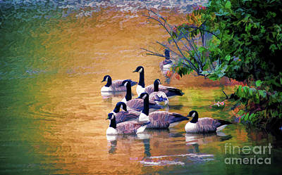 Poster featuring the photograph Canada Geese - Autumn At Pandapas Pond by Kerri Farley