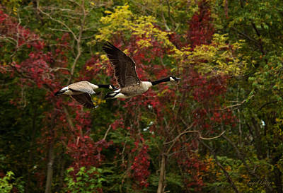 Poster featuring the photograph Canada Geese In Autumn by Angel Cher