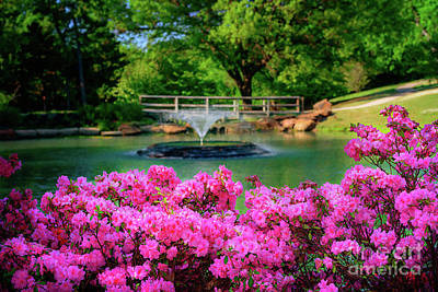 Candy Pink Azaleas At The Azalea Festival Poster