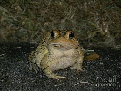 Cane Toad Poster by Terri Mills