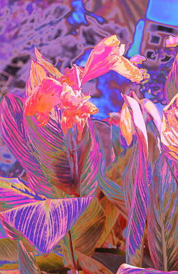 Canna Abstract 9 Poster