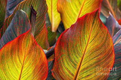 Canna Beleave The Colors Poster by Gary Holmes