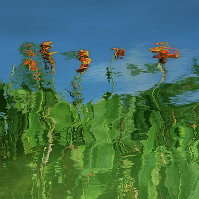 Canna Lilies Reflected Poster